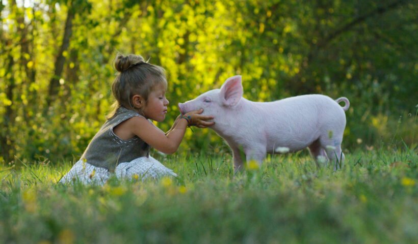 vegano amor animal respeto